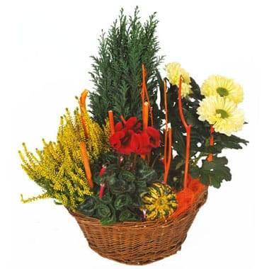 Coupe de plantes Jardin d'Hiver