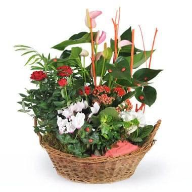 Coupe de plantes La Corbeille Fleurie
