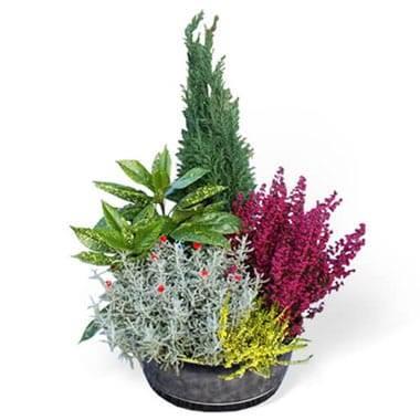 Coupe de plantes Rêve Extérieur