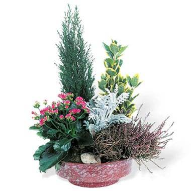 Coupe de plantes Adieu Eternel
