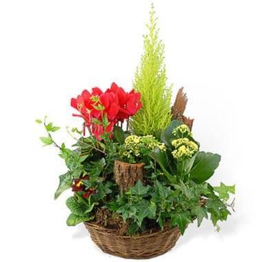 Coupe de plantes Rêve Floral